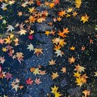 Осенняя дорога :: Максим Гололобов