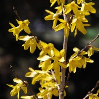 весеннее цветение :: esadesign Егерев