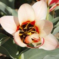 Весенний цветок :: esadesign Егерев