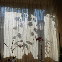 цветы и тени_1 :: Михаил Гранат