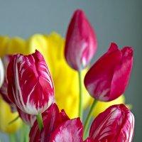 любимые цветы... :: Надежда Шемякина