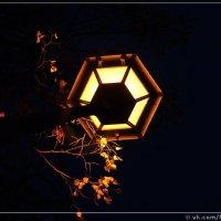 Осеннее :: ФотоДуэт- Самара