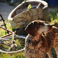 Велосипед, собака, лодка :: Ольга Мальцева