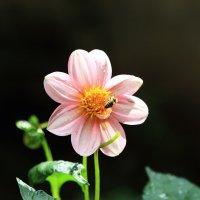 Летние цветочки 1 :: Марина Дегтярева