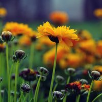 вечерние цветы :: Nina Delgado