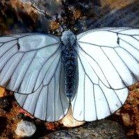 .......просто - бабочка!..... :: Ира Егорова :)))