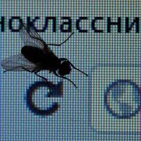 Муха в Одноклассниках :: Сергей Михальченко