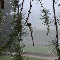 Дождливая осень. :: Харис Шахмаметьев