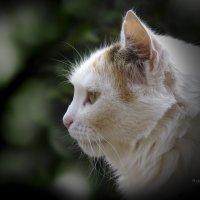 Портрет кошки :: PersONA Incognito