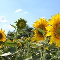 лето :: Света Насонова