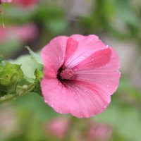 Летние цветочки :: Марина Дегтярева