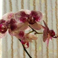 Цветы и тени_6 :: Михаил Гранат
