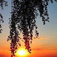Лучи уходящего солнца. :: Наталья Юрова