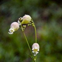 Неизвестные цветы :: Сергей Лошкарёв
