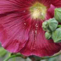 цветы :: Александра Невзорова
