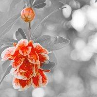 цветок с бокэ :: Nina Delgado