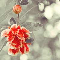 цветок :: Nina Delgado