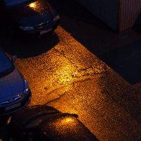 Золотой дождь :: Сергей Михальченко