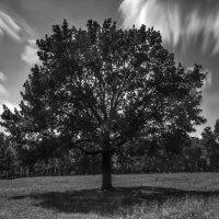 The Tree :: Олег Мишунов