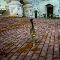 Монастырский кот... :: Александр Никитинский