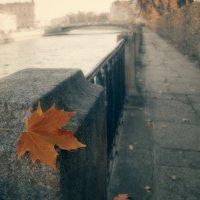 Осенний лист кленовый :: Михаил Александров