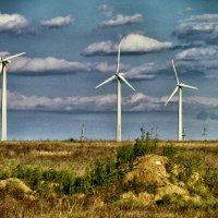 Они подвластны ветру :: Андрей Козлов