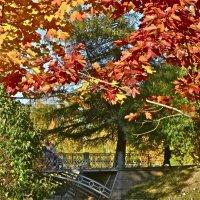осень не жалеет красок :: Елена