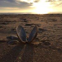 Ракушка на берегу Финского залива :: Оксана Ярёменко