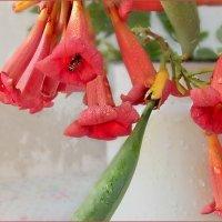 Пока живы цветы ,пчелка всегда найдет что с них взять... :: Людмила Богданова (Скачко)
