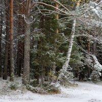 Выпал первый снег :: Галина Кан