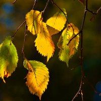 Уходящая осень :: Владимир Кроливец