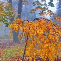Осень золотая :: Vladimir Lisunov