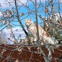 Кот наблюдает с деревца. :: Новиков Игорь