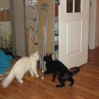 Кошачьи разборки.. :: Татьяна