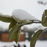 Снежок на даче :: юрий Амосов