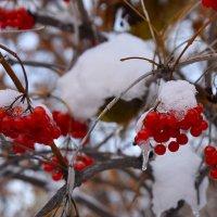 Ягода замороженная. :: Валерий Медведев