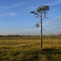 Предзакатное болото :: Владимир Брагилевский