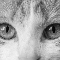 Red eyes. :: Владимир Лазарев