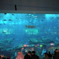 Океанариум :: Виталий Селиванов