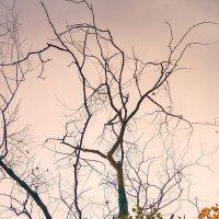 Осень фото :: Genych