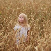 Златовласка в пшенице :: Светлана Орешко