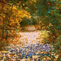 Осень. :: Наталья Малкина