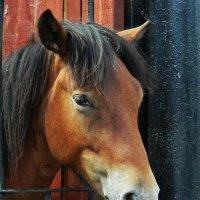 Портрет лошади :: Валентина Пирогова