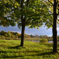 Бродит осень меж деревьев.. :: zoja