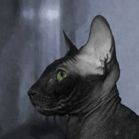 Всё тот же кот. :: Марина Влади-на