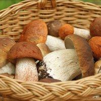 Благородные грибы. :: Елена Kазак