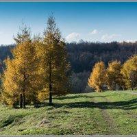 Золотая осень :: Владимир Белов