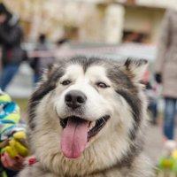 собака-улыбака))) :: Стелла