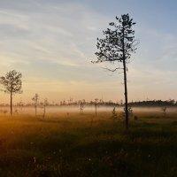 Карельские болота :: Владимир Брагилевский
