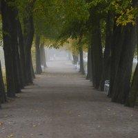 В аллеях пушкинских расхаживал туман.... :: Юрий Цыплятников